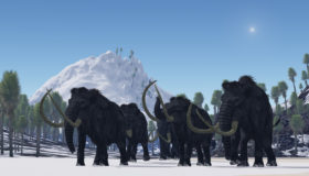 Comeback of the Woolly Mammoth: Bringing Back an Extinct Species