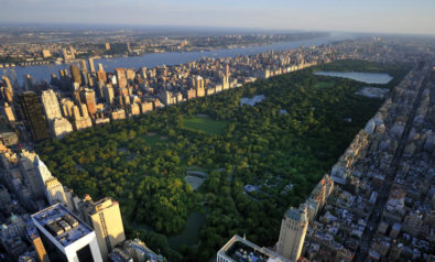 City Nature is a Gateway for Climate Activism