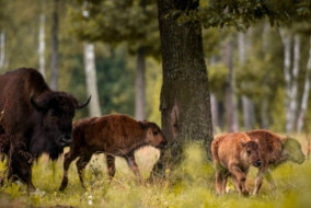 Destroying One of Europe's Last Ancient Forests