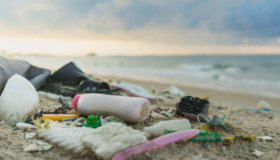 Plastic Pollution: Turning a Problem into a Solution
