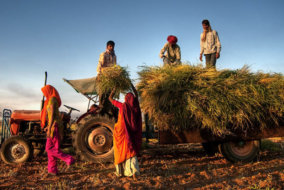 Indian Politicians Write Off Loans and Farmers Kill Themselves
