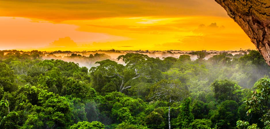Amazon rainforest, Amazon fires, fire in the Amazon rainforest, Amazon, Brazil news, Brazil, Brazilian government, environment news, environment, news on the environment