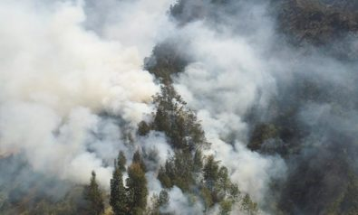 How Indonesia Can Prevent Forest Fires
