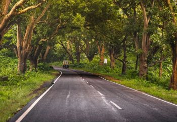 Indigenous Communities Can Counter Naxals and Protect Forests in India