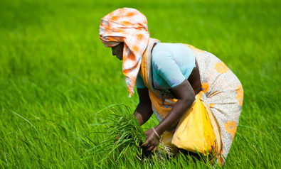 It's Time to Introduce a Universal Basic Income for India's Farmers