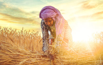 Agriculture Is India's Ray of Hope in Time of Crisis