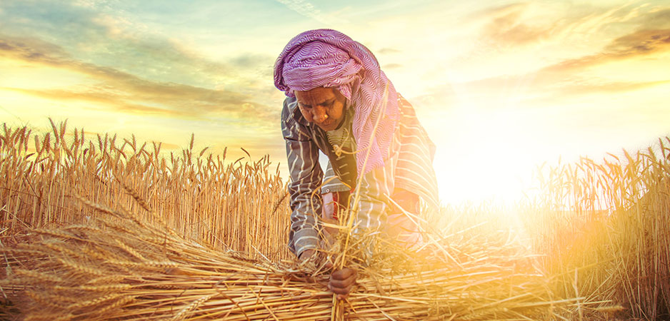 Professor Devinder Sharma, India harvest 2020, India agriculture news, India agriculture sector employment, India urban migrant workers, India rural poverty, Narendra Modi Atmanirbhar Bharat, India rabi, India kharif, India COVID-19 effect on agriculture