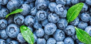 Hans-Georg Betz, blueberry farming, Spain agriculture news, Spain Vox party, Spain water scarcity, Spain Donana national park, Spain blueberry production, virtual water, water intensive crops, cash crops environmental toll